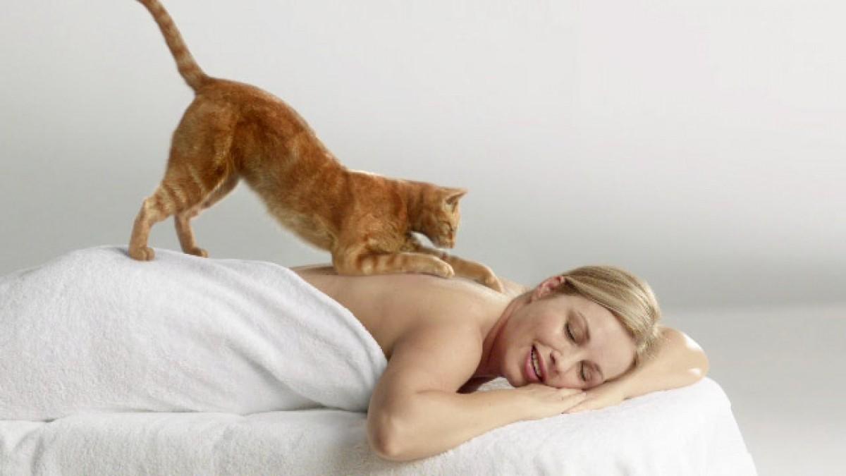 Как коту сделать массаж